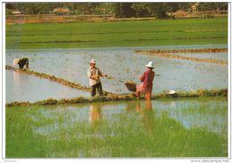 Dayly Life Of Vietnam - Scoop Watering - Vietnam