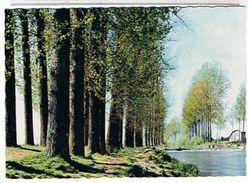 21..GENLIS   LES  BORDS  DE TILLE   La Baignade      CPM  TBE - Autres Communes