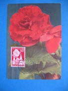 Carte Maximum - Belgique  Rose  1955 - Maximumkarten (MC)