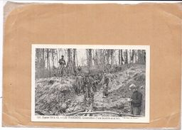 GUERRE 1914/15 - LES TRANCHÉES - Construction D'une Tranchée Sous Bois    - NANT2  - - Guerre 1914-18