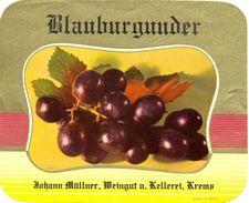 1585 - Autriche - Blauburgunder - Johann Müllner - Weingut U. Kellerei - Krems - Etiquettes