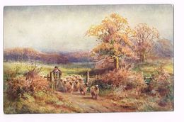 IN THE SCOTTISH HIGHLANDS - Scotland -HIGHLAND PASTURES - SHEEP-  TUCK'S POST CARD - Peintures & Tableaux