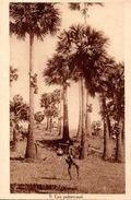 CONGO BELGE : Palmeraie - Belgisch-Congo - Varia