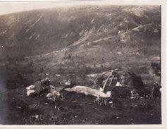 Photo Juillet 1921 TROMSO - Lapp, Lappeleir (A184) - Norwegen