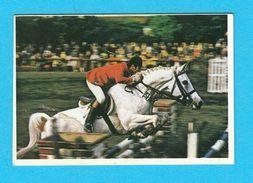 EQUESTRIAN SPORT - Mediterranean Games 1979. * MINT STICKER * Sport Equestre Deporte Reitsport * Jeux Mediterraneens - Equitation