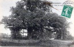 D91 - Mongeront - Forêt De Senart ( Beau Chêne Et Route De L'ermitage ) E.L.D. - Crosnes (Crosne)