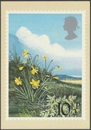 British Flowers, 10½p, Daffodils, 1979 - Royal Mail Stamp Card PHQ 34b - Stamps (pictures)