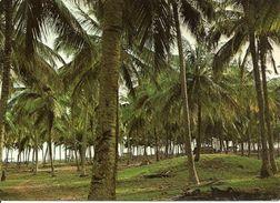 Lagos (Nigeria) Lagos State, Coconut Palm Forest At Badagry Beach, Foret De Cocotiers à La Plage De Bagadry - Nigeria