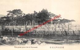 The Great Pinte-tree Of Karasaki - Japan