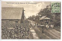 INDONESIE - Tabak Transport Van De Droog-naar De Fermenteerschuur - Indonésie