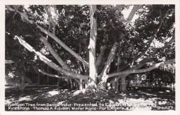 Florida Fort Myers Banyan Tree At Thomas A Edison Winter Home Re