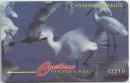 CAYMAN ISLANDS - SNOWY EGRET - 13CCIC - Cayman Islands