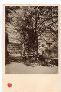 18904-LE-ALLEMAGNE-Bad Rippoldsau A.-G.--Rippoldsau,Bad. Schwarzwald-Frühstücks-Terrasse - Bad Rippoldsau - Schapbach