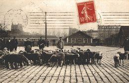 MARCHE AUX BESTIAUX DE LA VILLETTE  MOUTONS ALLANT AUX PARCS - Arrondissement: 19