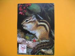 Card Maximum Korea - Carte Maximum Corée - Squirrel - Ecureuil - Korea, South