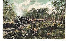 AUSTRALIE LONG TRAIN IN JARAH FOREST 1907 CPA 2 SCANS - Autres