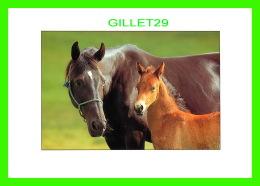 CHEVAUX - HORSES - UNE MÈRE AVEC SON POULIN - PHOTO OLIVIER HOUDART - ÉDITION ALAIN BEAUDRY - ÉCRITE EN 2005 - - Chevaux