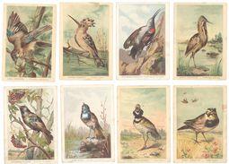 Lot 17 Chromos Grand Format Oiseaux, Alouette, Linotte, Traquet, Sitelle, Grive, Cini, ...signées Lescure - Autres