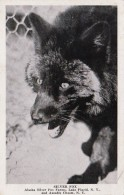 New York Lake Placid Silver Fox Alaska Silver Fox Farms 1948