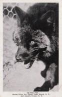 New York Lake Placid Silver Fox Alaska Silver Fox Farms 1948 - Adirondack