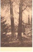 Neufchâteau - L'ardenne - Louis Wilmet - Les Géants De La Forêt - Neufchâteau