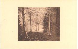 Neufchâteau - L'ardenne - Louis Wilmet - Clairière Ensoleillé - Neufchâteau