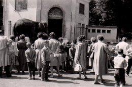 Photo Originale Promenade Au Zoo, Il Y A Foule Chez Les éléphants Vers 1950 - Lieux
