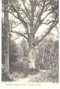 Peruwelz - Bon-Secours - Le Gros Chêne - Péruwelz