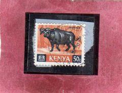 KENYA 1966 FAUNA ANIMALS BUFFALO ANIMAL ANIMALI BUFALO ANIMALE CENT. 50 USATO USED OBLITERE' - Kenia (1963-...)