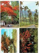 Lot 4 Cpm - ILE DE LA REUNION - Allée Cocotiers Case Créole Flamboyant En Fleur - Arbre Cocotier - La Réunion