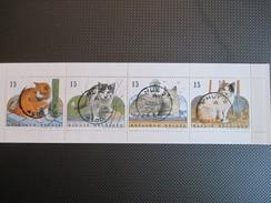 B 24 - Katten - Gestempeld Huy - Belgien