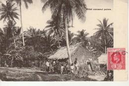 Midst Cocoanut Palms. - Fidji