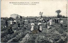 33 - SAINT GERMAIN Du PUCH --  Le TROMPAT --  Culture Des Haricots Soissons - La Cueillette - Frankrijk