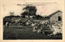 CPA Etat De SAO PAULO Elevage Du Mouton. Ed. De La Maison Bresilienne De Propagande BRAZIL (a4761) - Brasil