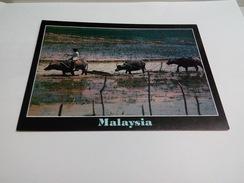 New Unused Postcard Malaysia #14 - Malaysia