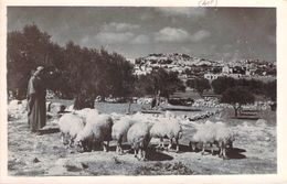 Cpsm Format Cpa  Palestine Bethlem Shepherd's Field  (animée)  R1176 - Palestine