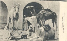 Algerie, Missions D'Afrique, Sahara, Méharistes Et Leurs Chameaux - Algerije