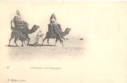 Algerie, Alger, Chameaux Avec Palanquin - Algerije