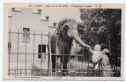 Rhône -  LYON - Parc De La Tête D'Or - L'Eléphant Loulou - 1934 - Lyon