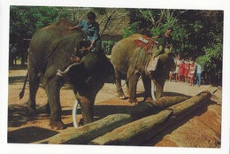 Working Elephants Thailand Pushing Timbers With Trunks Vintage Postcard - Elephants