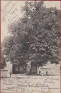 Zoersel Dorp Zicht Op Den Lindeboom 1909 Geanimeerd Kempen - Zoersel