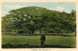 TRINIDAD(ARBRE) - Trinidad