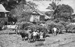 TRINIDAD(SUCRE) - Trinidad