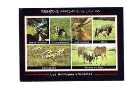 Cpm - Réserve Africaine De SIGEAN - Les Antilopes Africaines KOUDOU ORYX KOB GNOU Allaite Petit Springboks élands Du Cap - Animals
