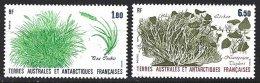 TAAF Yv 125/26 ** Flore  Antarctique - Terres Australes Et Antarctiques Françaises (TAAF)