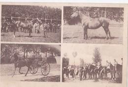 Carte 1920 MULTIVUES CHEVAUX DE COURSES / STEEPLE CHASE / COURSES D'OBSTACLES - Chevaux