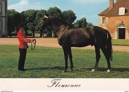 HIPPISME - HARAS - CHEVAUX - ETALONS - Fleuronne (Trotteur Français) - CPM - Chevaux