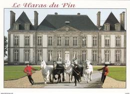 HIPPISME - HARAS - CHEVAUX - ATTELAGES - PRESENTATION DE 5 PERCHERONS - CPM - Chevaux
