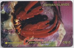CAYMAN ISLANDS - CRAB - 4CCIB - Cayman Islands