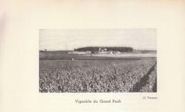 1935 - Iconographie - Saint-Germain-du-Puch (Gironde) - Le Vignoble - FRANCO DE PORT - Ohne Zuordnung